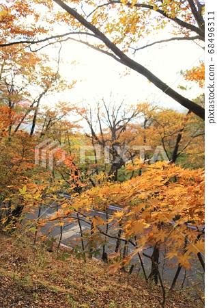 Autumn leaves of Nikko Iroha Saka 68496311