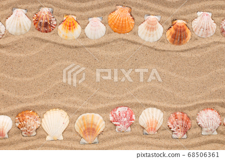 Two rows of seashells lying on the sand.   68506361