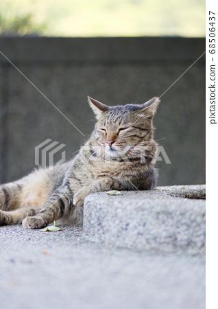 街貓 68506437