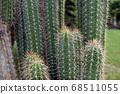 Pillar cactus 68511055