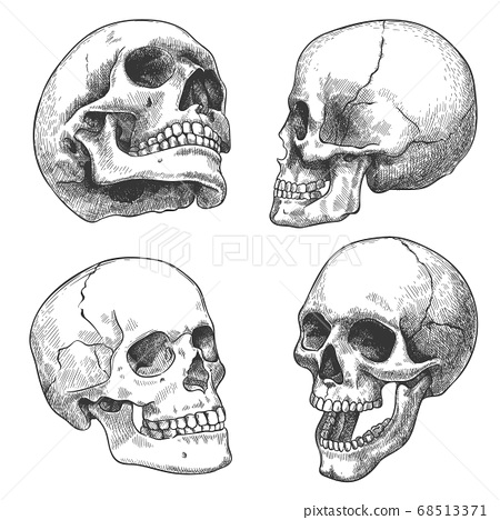 Hand drawn skull. Sketch anatomical skulls in different angles, gothic tattoo. Human skeleton dead head halloween engraving vector set 68513371