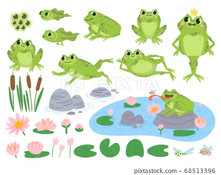 Cartoon frogs. Green cute frog, egg masses, tadpole and froglet. Aquatic plants water lily leaf, toads wild nature life vector set 68513396