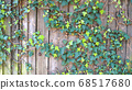 Green ivy on vintage wooden wall backgound 68517680