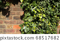 Green ivy on vintage brick wall backgound 68517682