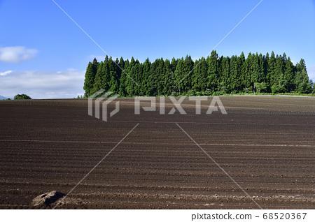 拍攝北海道音部町發芽的白菜田的夏日風景 68520367