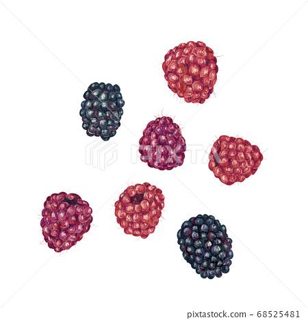 覆盆子/黑莓 68525481