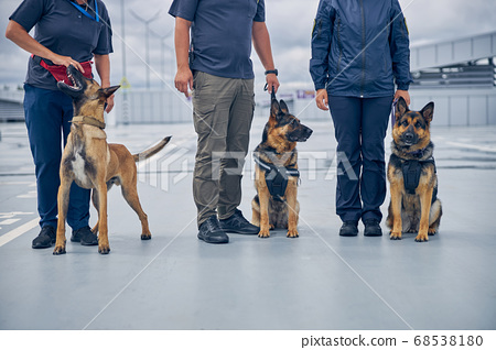 Officers with security police dogs standing in airfield 68538180