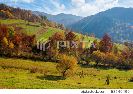countryside autumn scene in mountains. trees in 68540499