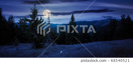 spruce forest on the hillside meadow at night. 68540521