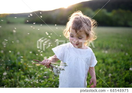 Small toddler girl standing on meadow outdoors in summer. Copy space. 68548975
