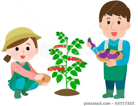 텃밭 남녀 방울 토마토 가지 일러스트 68557885