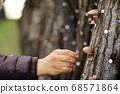 표고버섯을 수확 중인 농민 68571864