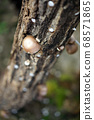 건강한 먹거리, 표고버섯, 버섯 재배 68571865