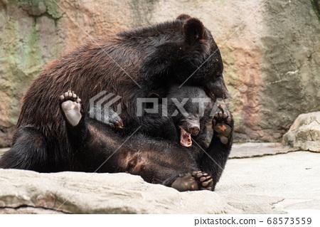 熊打架 68573559