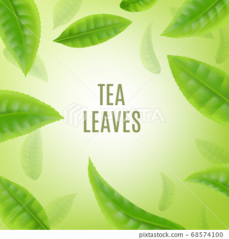 Banner or poster background with green tea leaves realistic vector illustration. 68574100