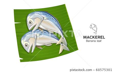 Mackerel fresh on banana leaf vector, popular food in thailand isolated 68575301