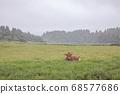 제주도 아침미소 목장의 풍경 68577686