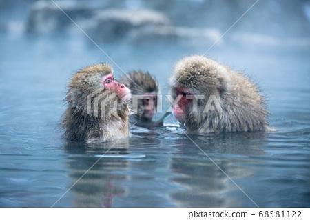 冬季在地獄谷溫泉猴中浸泡的日本獼猴 68581122
