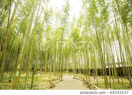 Kyoto Sagano sightseeing spot, small bamboo path, fresh green bamboo grove, Japanese style image material 68581637