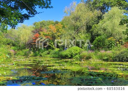 [고치 현] 수련이 피는 모네의 정원 연못 68583816