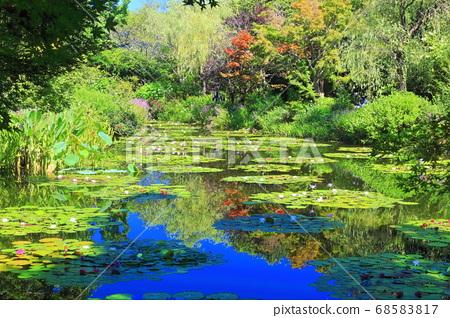 [고치 현] 수련이 피는 모네의 정원 연못 68583817