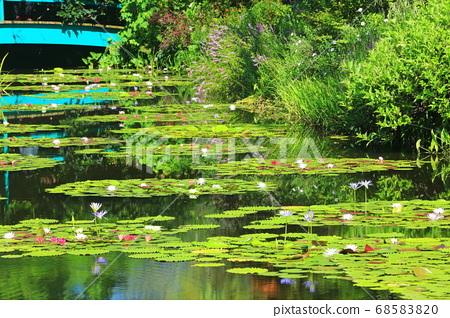[고치 현] 수련이 피는 모네의 정원 연못 68583820