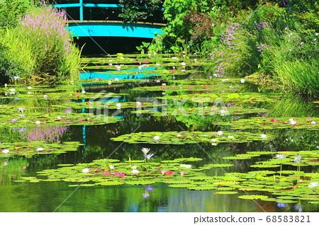 [고치 현] 수련이 피는 모네의 정원 연못 68583821