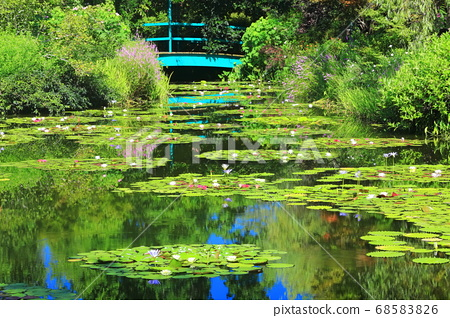 [고치 현] 수련이 피는 모네의 정원 연못 68583826