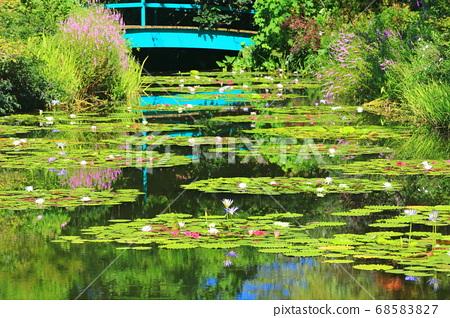 [고치 현] 수련이 피는 모네의 정원 연못 68583827