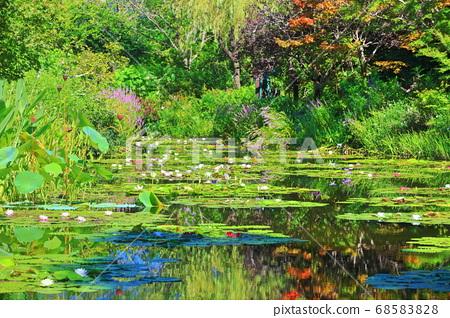 [고치 현] 수련이 피는 모네의 정원 연못 68583828