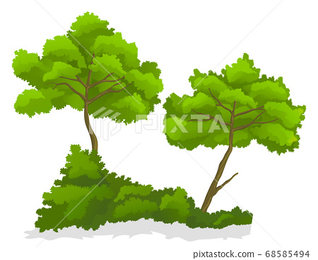 Green isolated at white background tree with bush, summer nature, plant with green leaves, tree icon 68585494