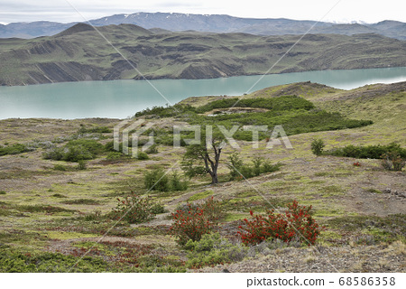 Nordenskjold lake in the Torres del Paine park  68586358