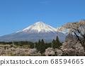 櫻花和雪妝的富士山 68594665