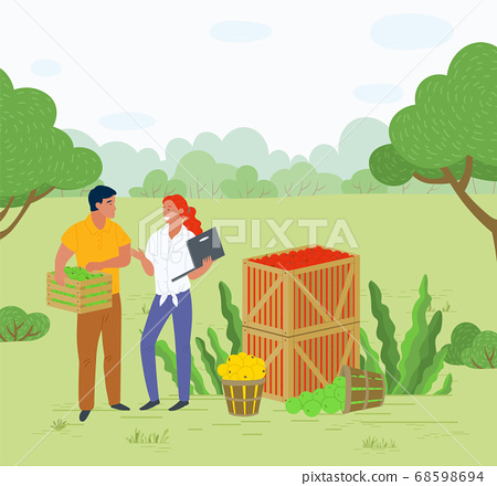 Picking Apples in Container, Local Fruit Vector 68598694