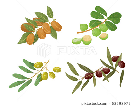 Castor and Olive, Almond and Macadamia Branches 68598975