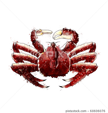 King Crab, watercolor isolated illustration of a crustacean. 68606076