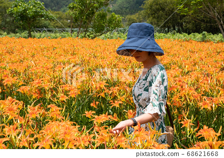 woman traveling at the tiger lily farm 68621668