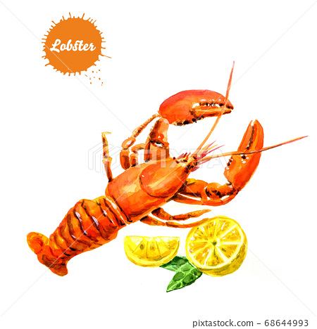 Lobster isolated  with lemon on white background, watercolor illustration. 68644993