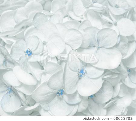 白霧淡藍繡球花特寫 68655782