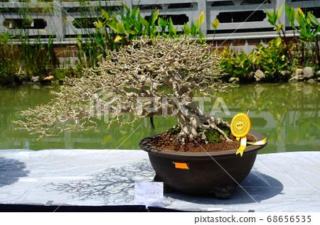 PUTRAJAYA, MALAYSIA -MAY 30, 2016: Bonsai tree display for public in Royal Floria Putrajaya garden in Putrajaya, Malaysia. 68656535