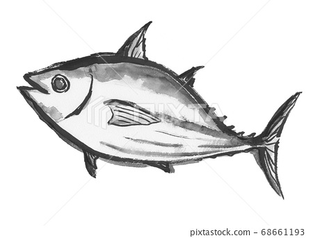 Illustration of bonito drawn with ink 68661193