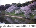 櫻桃樹 68663789