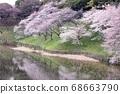 櫻桃樹 68663790