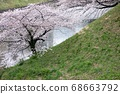 櫻桃樹 68663792