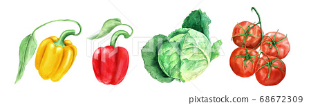 Set of vegetables: tomato, head cabbage and yellow and paprikas watercolor illustration 68672309
