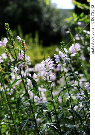 식물원 68675642