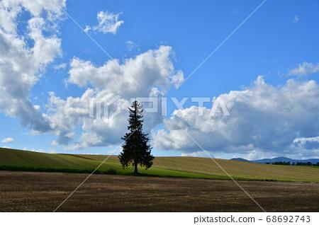 여름의 크리스마스 트리 나무 68692743