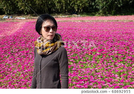 woman walking at the colorful cosmo flowers farm 68692955