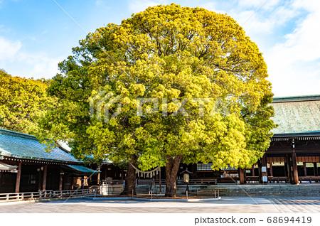메이지 신궁 부부 녹나무 68694419