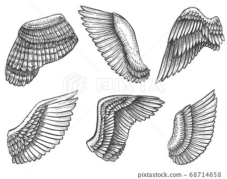 Hand drawn wings. Sketch bird or angel wing with feathers, engraved different heraldic symbols for tattoo or emblem vintage vector set 68714658